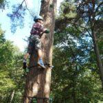 klimbomen bushcraft zomerkamp