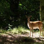 herten spotten tijdens bushcraft zomerkamp