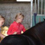 paarden kinderkamp