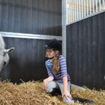 in de paardenbox ponykamp